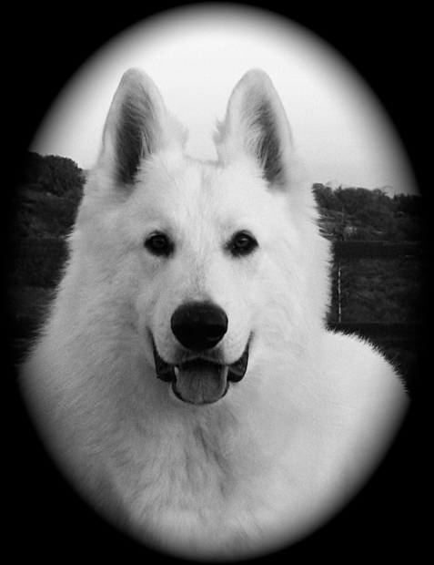 Ice berger blanc suisse 10months