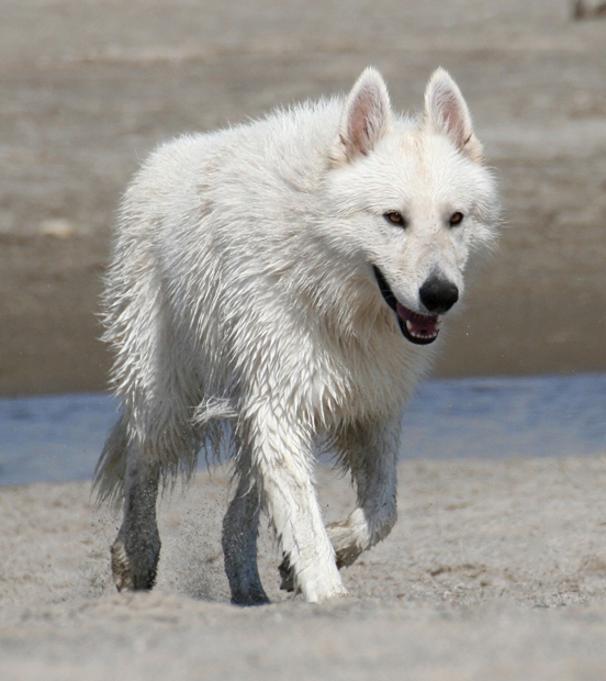 Ice berger blanc suisse beach