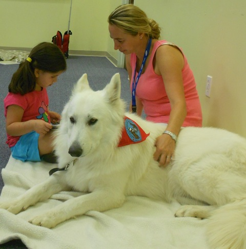 Ice berger blanc suisse therapy