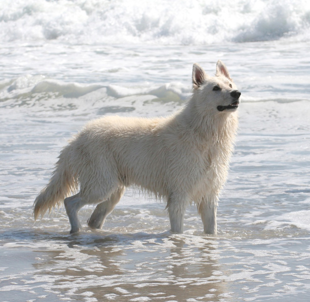 Ice berger blanc suisse waves