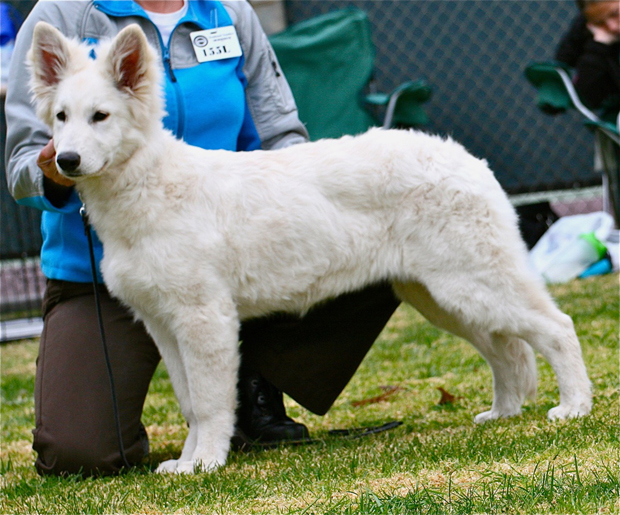 Noel berger blanc suisse first show