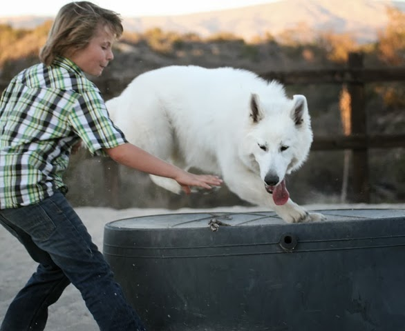 dww young adult Berger Blanc Suisse 1