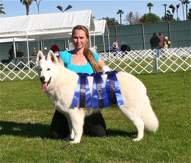 ukc champion ice